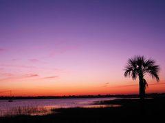 Palmetto Silhouette by <b>livingworld</b> ( a Panoramio image )