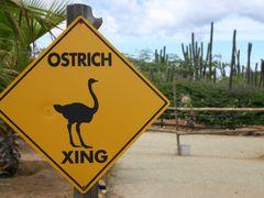 Ostrich farm, Aruba by <b>Hans Sterkendries</b> ( a Panoramio image )