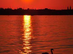 The Sunset- Swan © by Sunpixx by <b>Sunpixx</b> ( a Panoramio image )