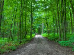 Emerald Road by <b>keithwatson66</b> ( a Panoramio image )