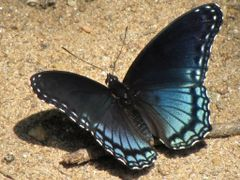 "Maya Angelou: ""We delight in the beauty of the butterfly, but ra by <b>jgevans</b> ( a Panoramio image )"