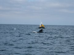 Whale Watching: Cape Breton, Nova Scotia by <b>aezaez</b> ( a Panoramio image )