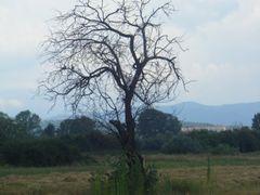 Okolina Nisa, Klasika: drvo i dve ptice, Nis, around, Eternal st by <b>Veljko N. Nis, Serbia</b> ( a Panoramio image )