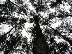 La grandeza de la Naturaleza by <b>leonardo paez</b> ( a Panoramio image )