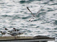 jump, strech & fly... by <b>hubert.zumbach</b> ( a Panoramio image )
