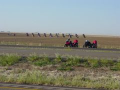 Cadillac Ranch by Stanley Marsh 1974. 5/20/2006 by <b>Tim Carr</b> ( a Panoramio image )