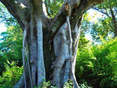 "Twin""s Trees... by <b>FGirolamo</b> ( a Panoramio image )"