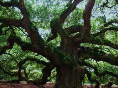 Angel Oak by <b>livingworld</b> ( a Panoramio image )