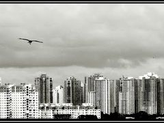 Skyline of New Town ©Anupam by <b>Anupam Mukherjee</b> ( a Panoramio image )