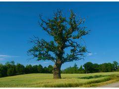 Baumriese by <b>Sebastian Maier</b> ( a Panoramio image )
