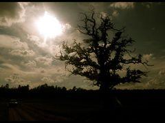 """wo bleibt Krabat ?"" by <b>Sebastian Maier</b> ( a Panoramio image )"