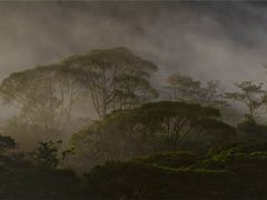 Rainforest by <b>Ulrich Greger</b> ( a Panoramio image )