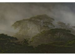 Rainforest (large) by <b>Ulrich Greger</b> ( a Panoramio image )