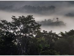 Rainforest 2 by <b>Ulrich Greger</b> ( a Panoramio image )
