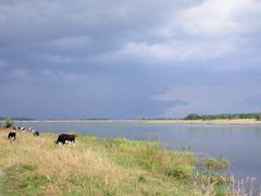 Oselia Cows by <b>samersam</b> ( a Panoramio image )