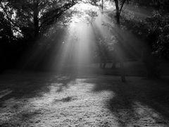 Sunday Morning Shadows by <b>opus1ny</b> ( a Panoramio image )