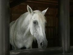 white horse ?? by <b>Kaiseikun</b> ( a Panoramio image )