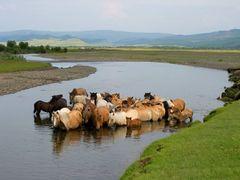 Horses -  - Mungunmurt - Mongolia by <b>Giorgio Skory</b> ( a Panoramio image )