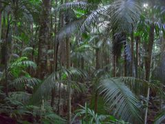 Mt. Tamborine Rainforest by <b>Korkut</b> ( a Panoramio image )