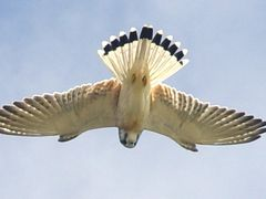 Bird of Prey by <b>VFedele</b> ( a Panoramio image )