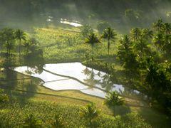 ?Foggy morning? by <b>?AXL?BACH?</b> ( a Panoramio image )