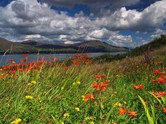 Irish Summer by <b>trolek</b> ( a Panoramio image )