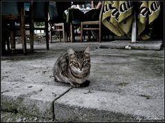 Serious Cat by <b>dardani.m</b> ( a Panoramio image )