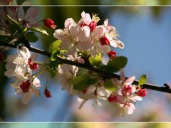 Spring 9 by <b>tamask</b> ( a Panoramio image )