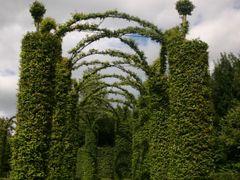 Hedge tunnel by <b>rimas</b> ( a Panoramio image )