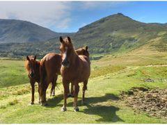 Lovak a havason / Mountain horses by <b>oferko</b> ( a Panoramio image )