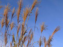 autumn_herbst01 by <b>? © ErAnger</b> ( a Panoramio image )