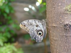 Vancouver Aquarium - Butterfly by <b>Damy</b> ( a Panoramio image )