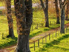 autumn_herbst06 by <b>? © ErAnger</b> ( a Panoramio image )