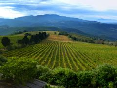 Weinberge/vineyard in Titignano  by <b>Wernerandreas</b> ( a Panoramio image )