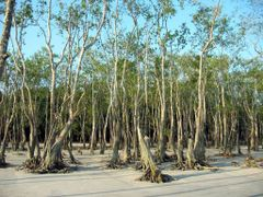 WORLD HERITAGE SITE:The Sundarbans in southern Bangladesh is the by <b>Shaikh Aslam Goni</b> ( a Panoramio image )