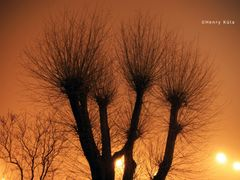 Silver Willow (Salix Alba) In The Fog by <b>Henry Kula</b> ( a Panoramio image )