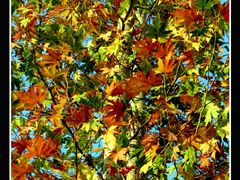 Autumnal  texture! by <b>Esmaeel  Bagherian</b> ( a Panoramio image )