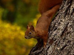 Jesien juz ....Autumn has already .... by <b>Malgorzata Kasiewicz</b> ( a Panoramio image )