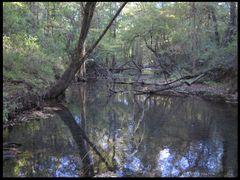 Tangled Creek by <b>L. Wray Dillard</b> ( a Panoramio image )
