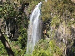 Cameron Falls - 19 Oct. 2010 by <b>tomfrombrisbane</b> ( a Panoramio image )