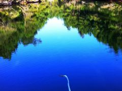 Great Egret Reflections by <b>iphotos</b> ( a Panoramio image )