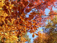 Van Buren Township, MI, US by <b>Irene Kravchuk</b> ( a Panoramio image )