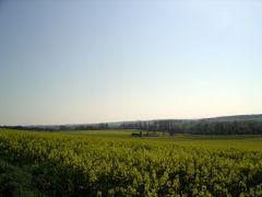 jez campagne centre -06 by <b>jezraoui</b> ( a Panoramio image )