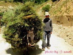 Trying to earn by <b>Farzan Asadi</b> ( a Panoramio image )