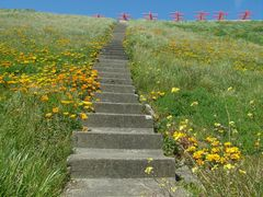 Stairs by <b>Eva Kaprinay</b> ( a Panoramio image )