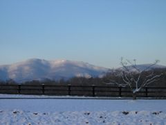 Morning Sun on Snowy Mountains, Dogwood, and Garden by <b>Brandon_Belew</b> ( a Panoramio image )