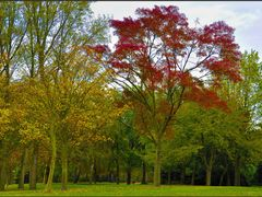 Maassluis - Autumn colours by <b>Ria Maat</b> ( a Panoramio image )