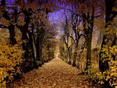 Do jesieni... / To Autumn... by <b>TomBit</b> ( a Panoramio image )