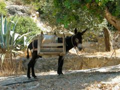 Beast of Burden. Cold Water Bay, Turkey. June 2010 by <b>beamish boy</b> ( a Panoramio image )