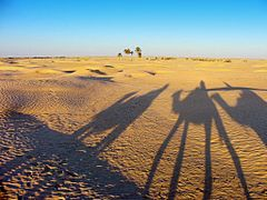 Tunizia (Douz)  Karavan.......Caravan by <b>Szolnoki Istvan</b> ( a Panoramio image )
